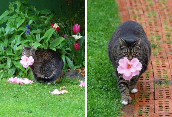 Кошечка приносит цветы хозяйке.