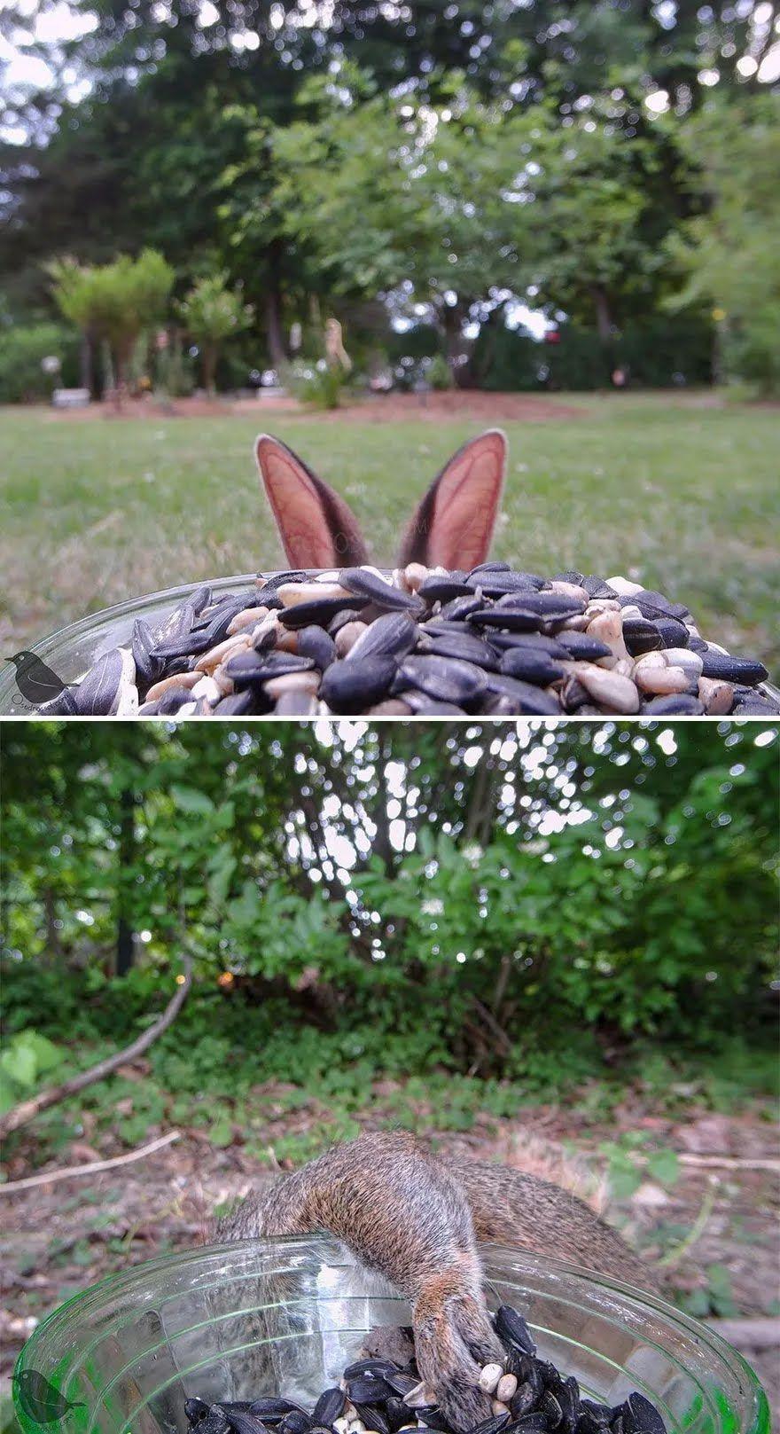 Кролик ховається від камери.