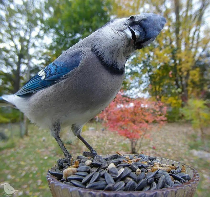 Пташеня розглядає камеру.