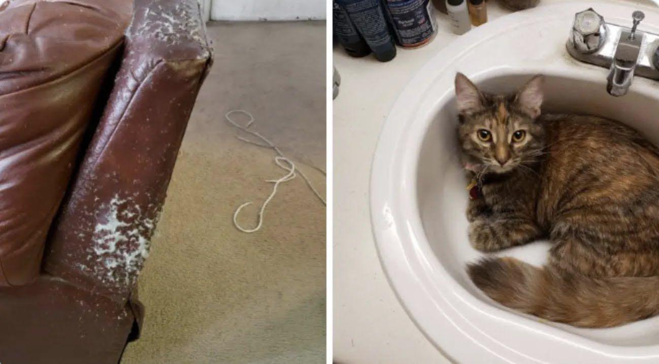 Кот всего сутки был сам дома.