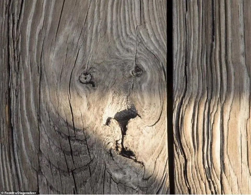"""Мордочка"" льва на дереве"