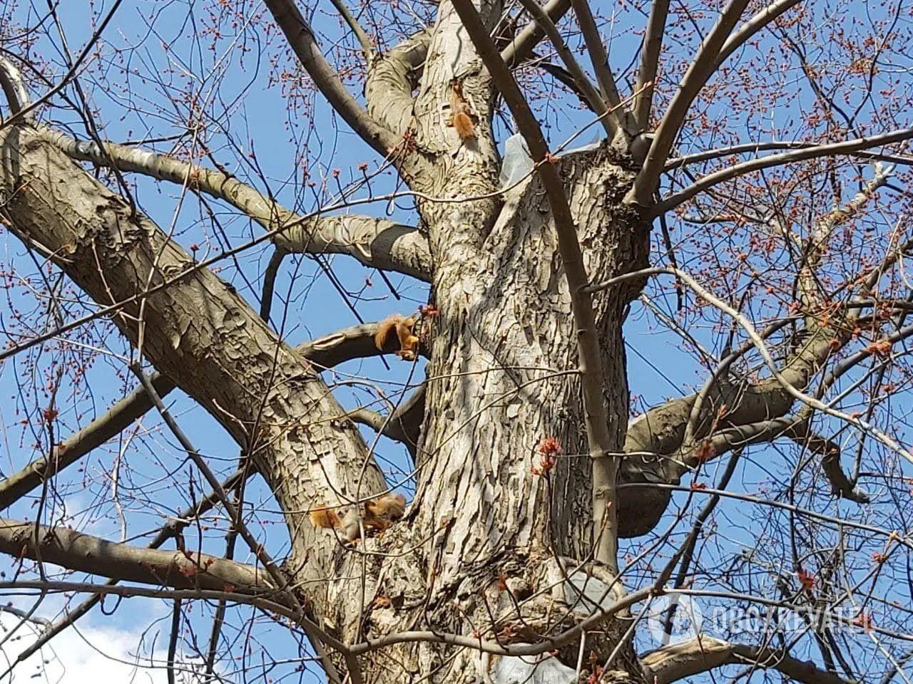 Дерева облюбували білки.