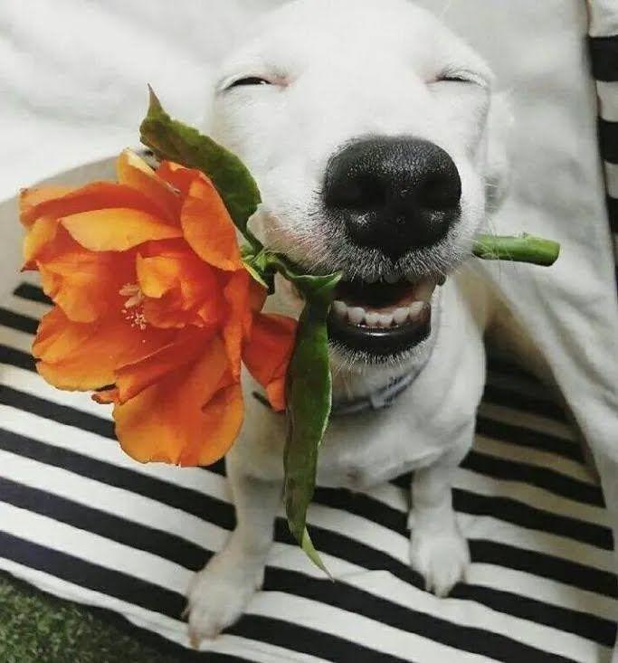 Радостный пес позирует на камеру.