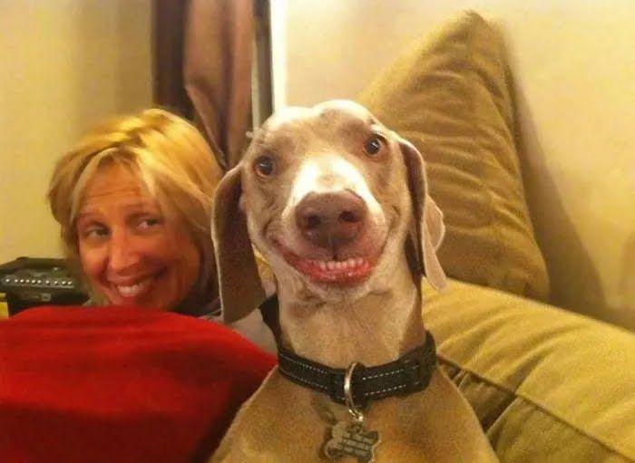 Пес повторяет улыбку хозяйки.