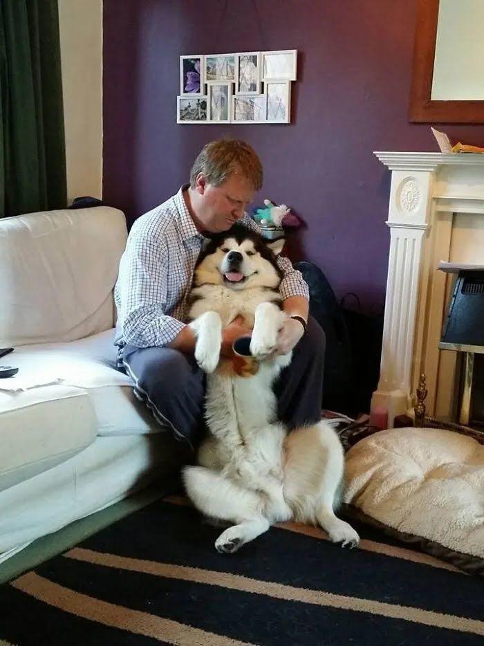 Пес радуется, когда хозяин уделяет ему внимание.