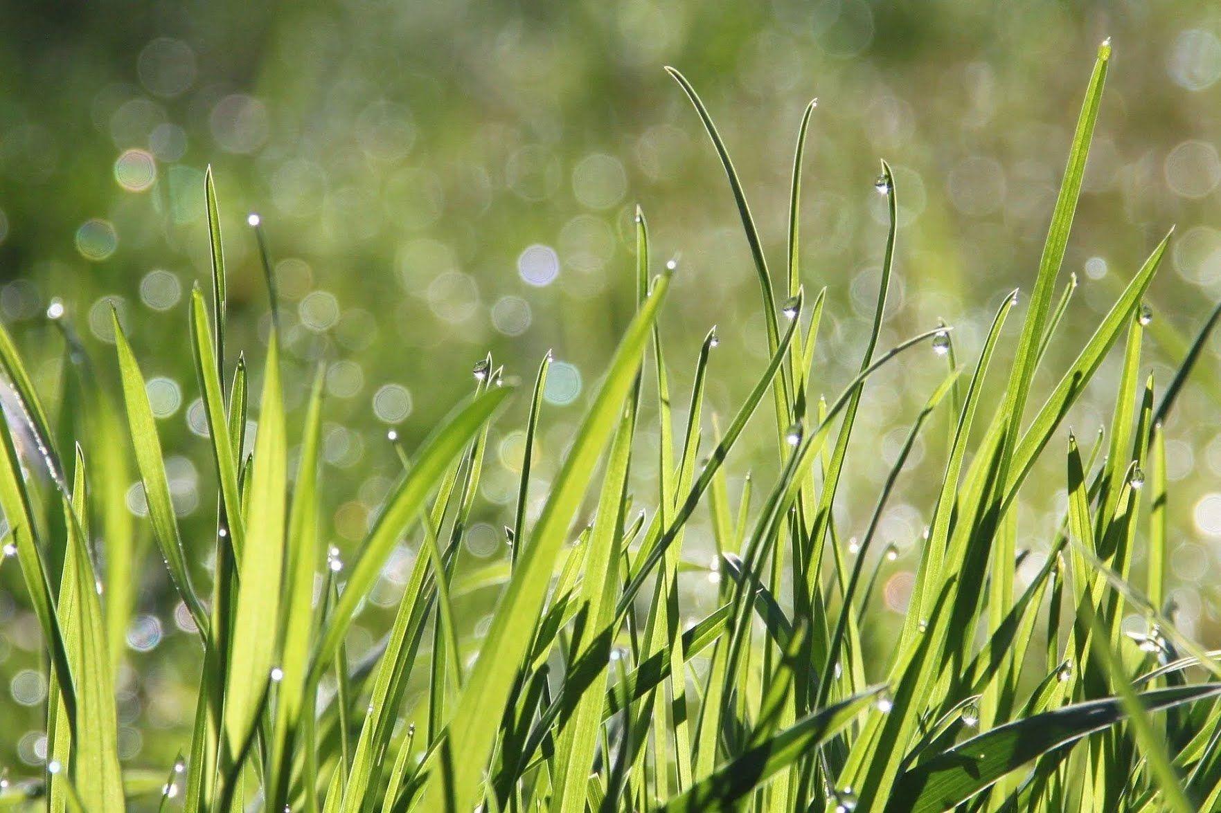 Багато роси – на гарну погоду, дуже мало – до дощу