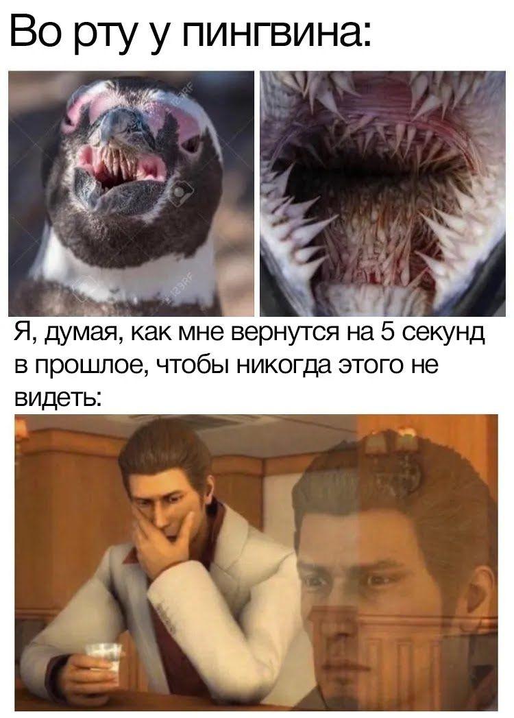Мем про пінгвіна