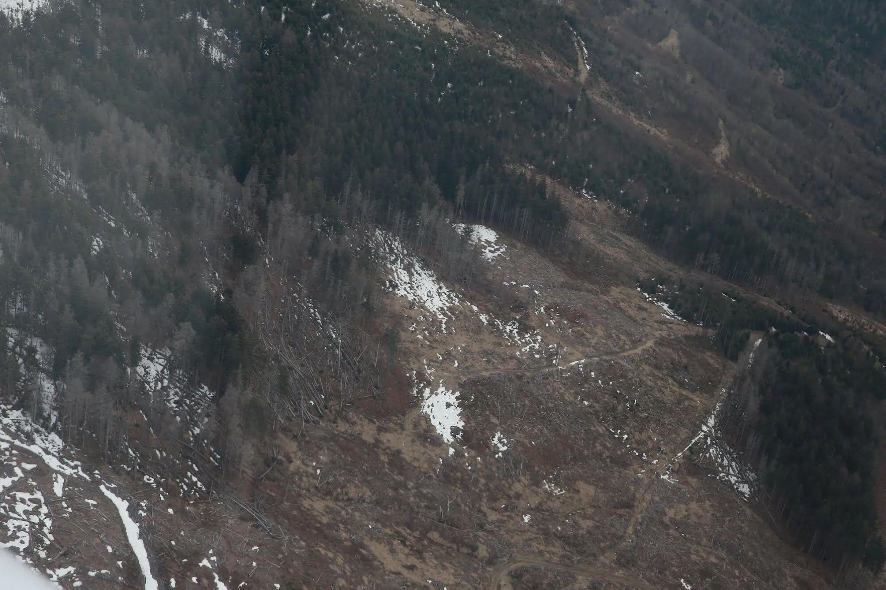 Дмитру Комарова вдалось зафільмувати браконьєрів-лісорубів