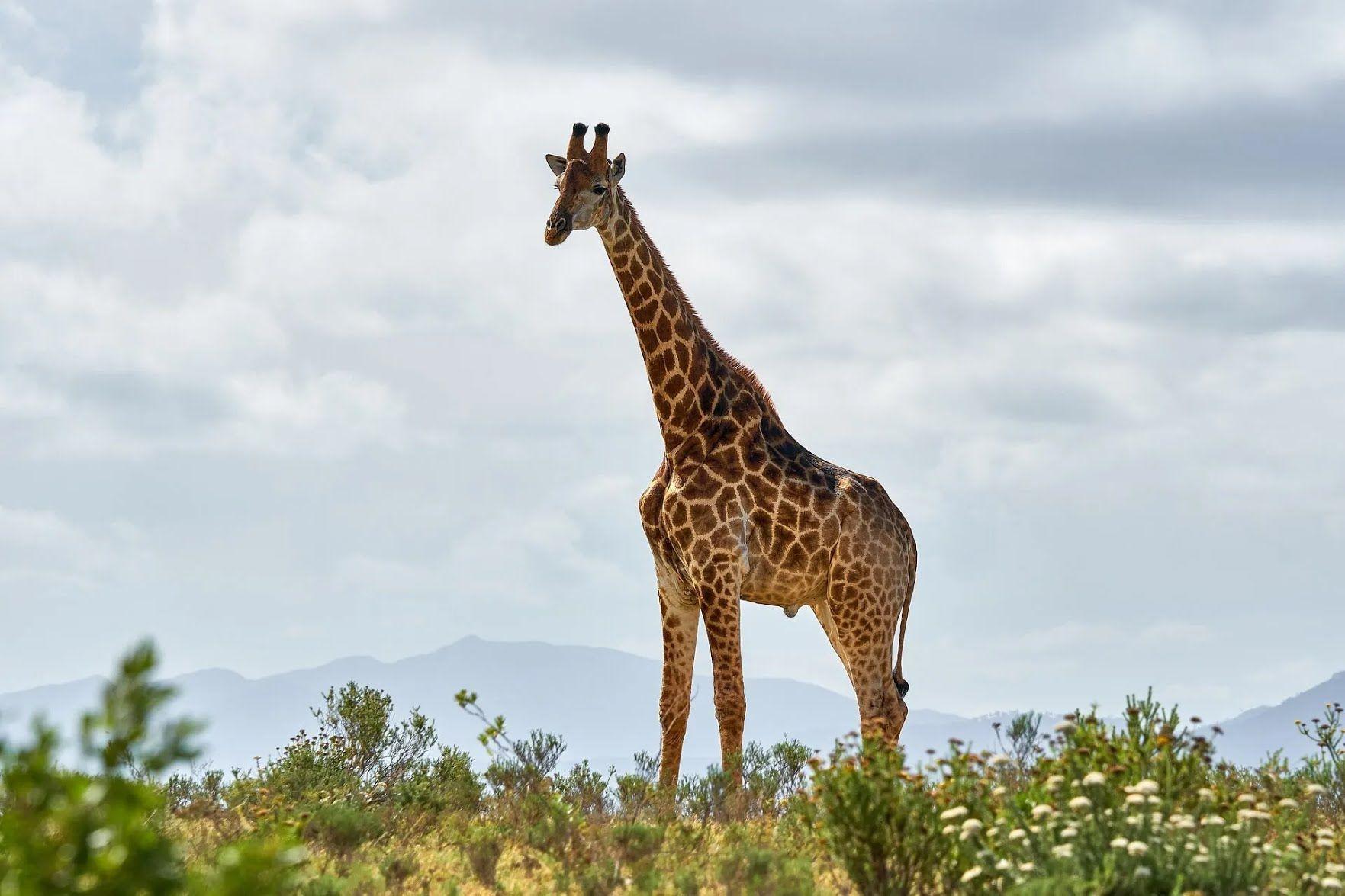 На берегах Паратетіса з'явилися жирафи, слони і багато інших видів тварин