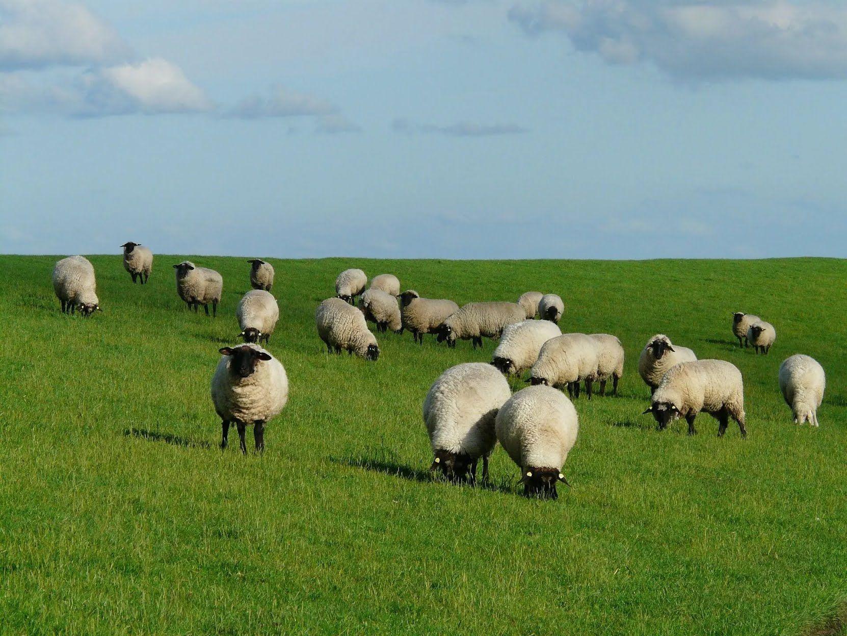На північ від Паратетіса мешкали предки нинішніх кіз і овець