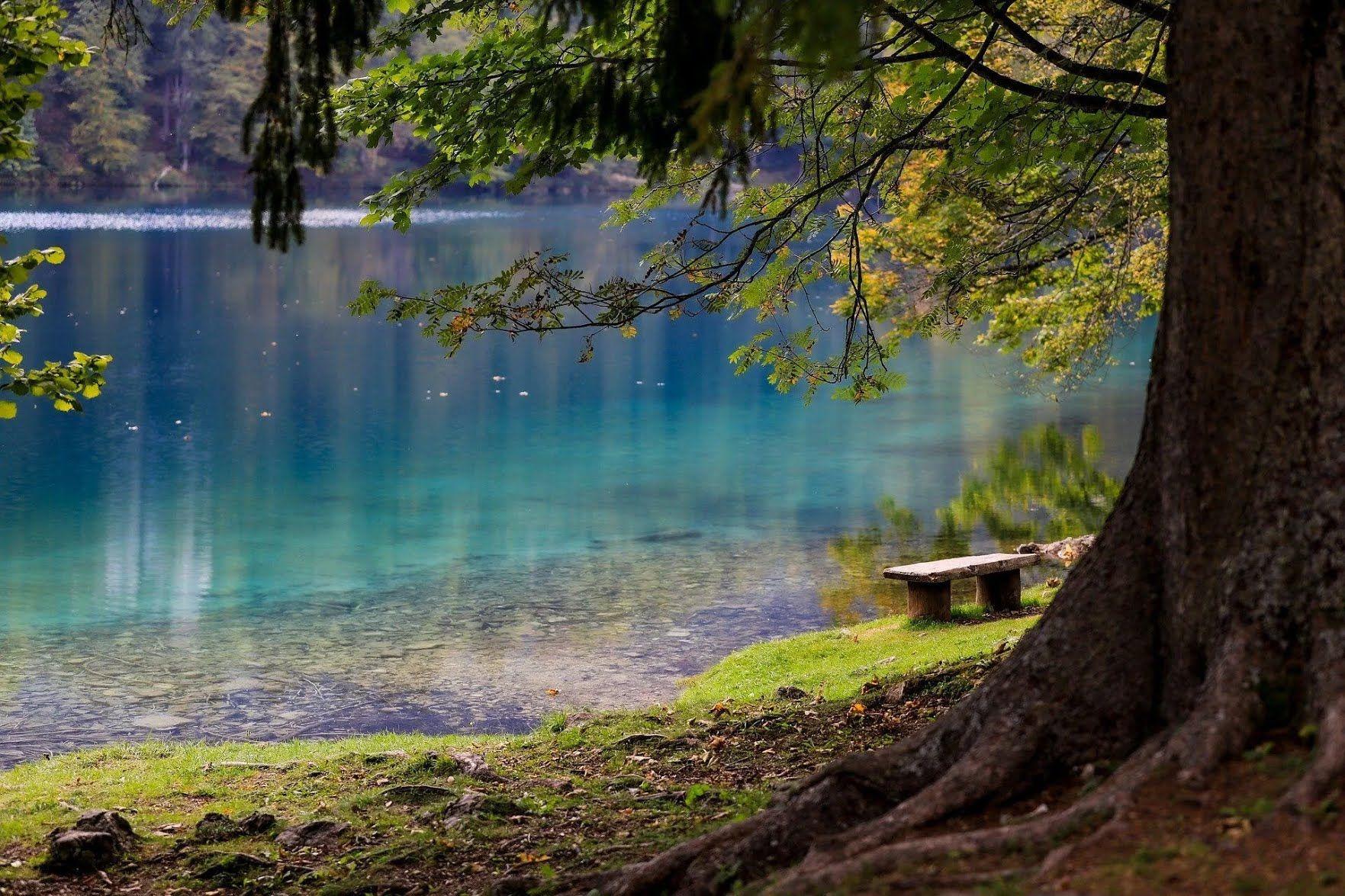 12 июня не стоит ходить в лес и бродить по траве