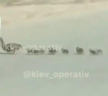 Каченята, яких задавили в Києві
