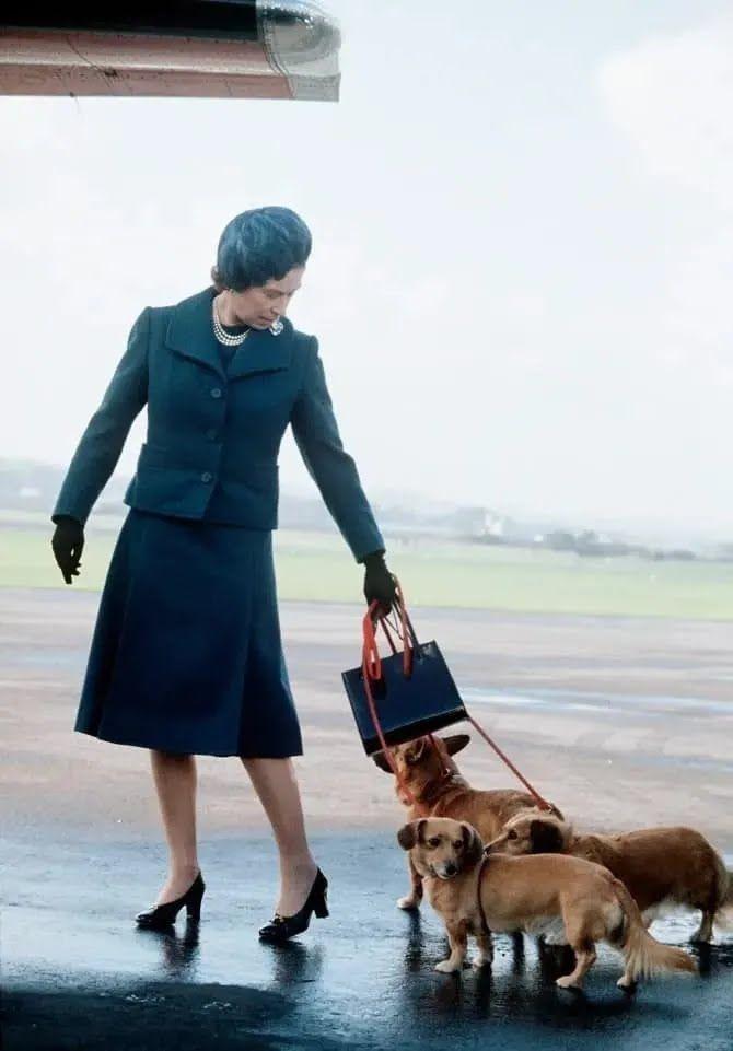 Близько десяти років тому у Єлизавети було 14 собак різних порід
