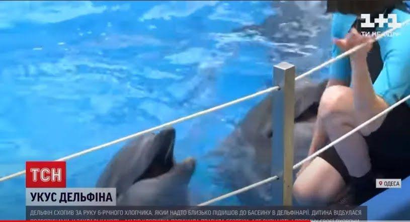 Дельфин в бассейне дельфинария .