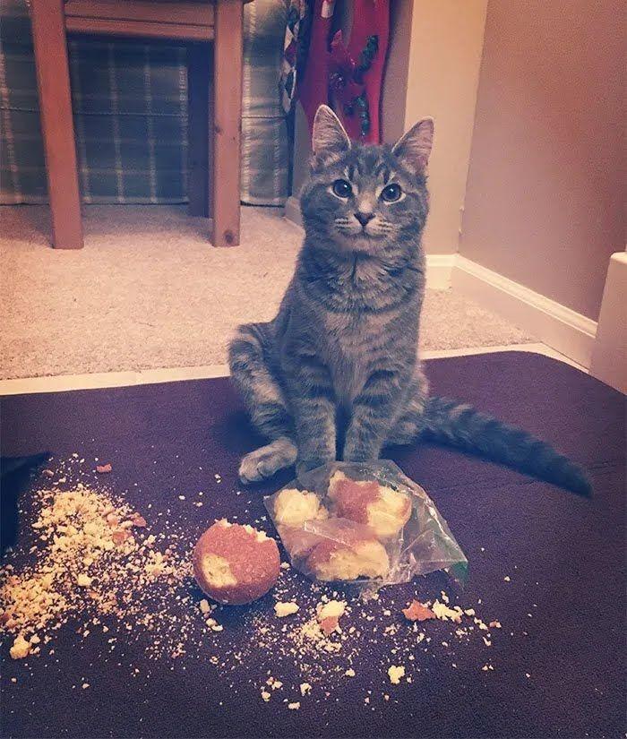 Кіт поласував кексами.