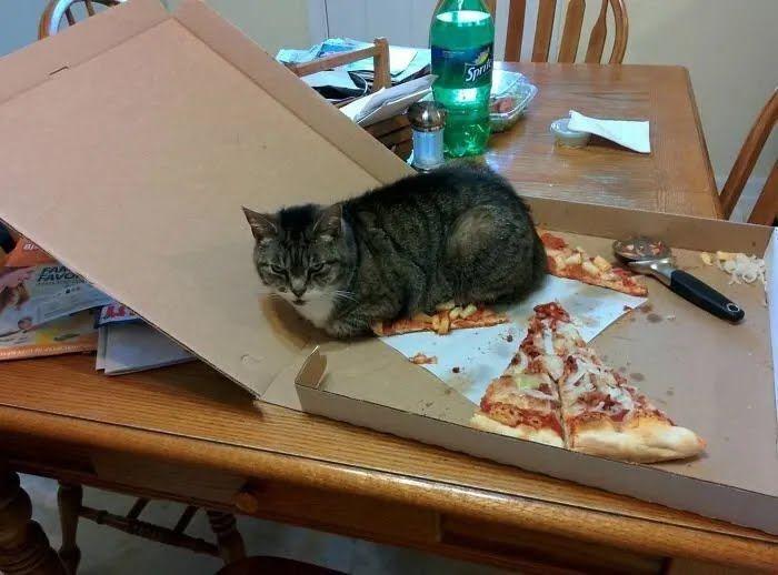 Кіт забронював шматок піци.