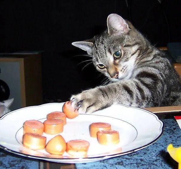 Сосиски – улюблений смаколик усіх котиків.
