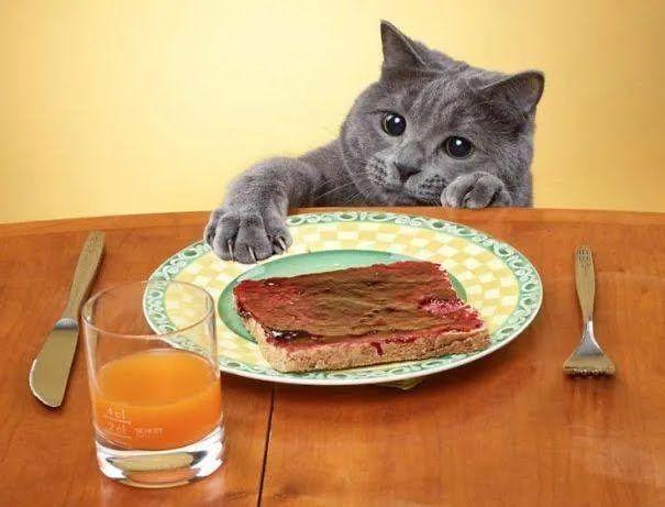 Котик хоче вкрасти канапку.