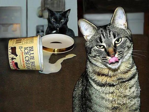 Коти поласували морозивом.