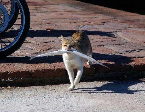 Кіт ходив на риболовлю.
