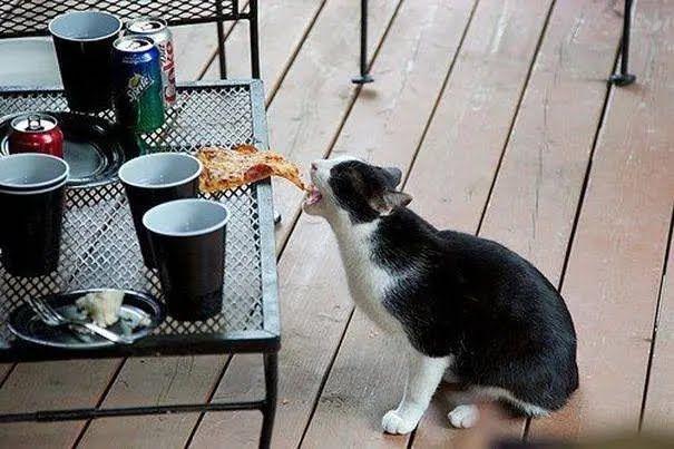 Кіт вкрав шматок піци.