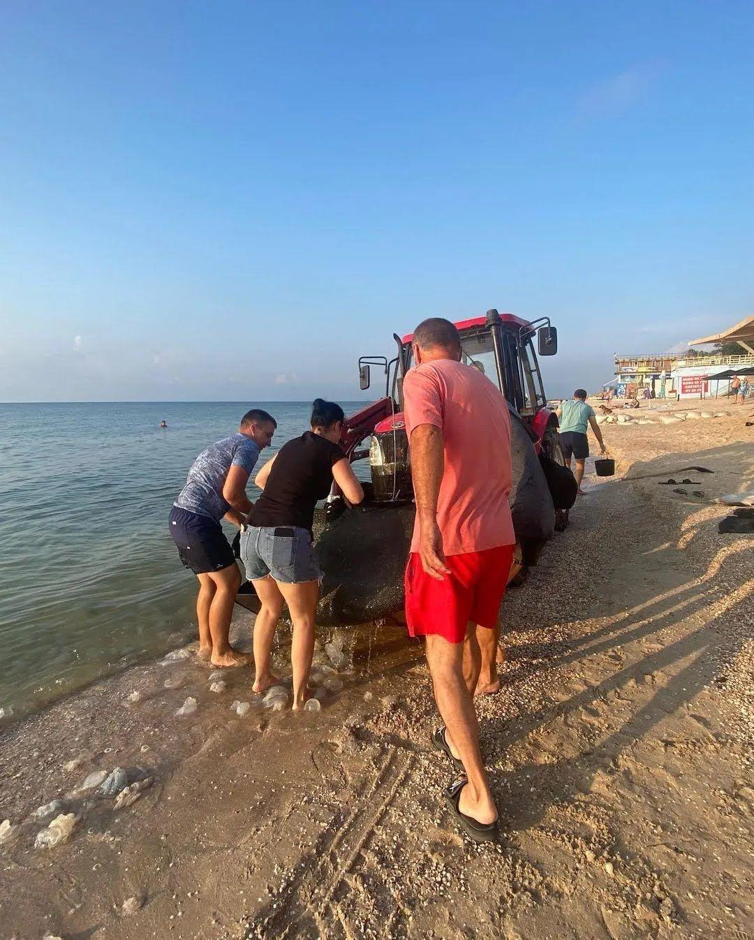 Медуз вивозять трактором