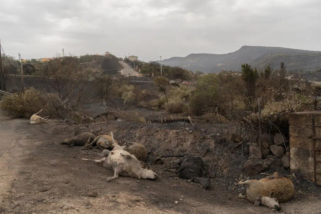 Результат пожаров в итальянской провинции.
