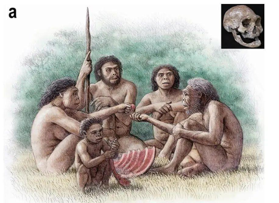 Собака, ймовірно, жив поряд із першими людьми в Грузії близько 1,8 млн років тому
