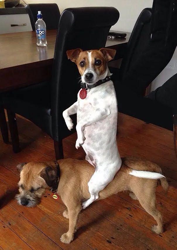 Собаки розважалися вдома