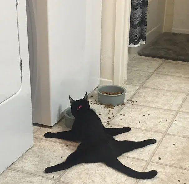 Кіт їсть лежачи