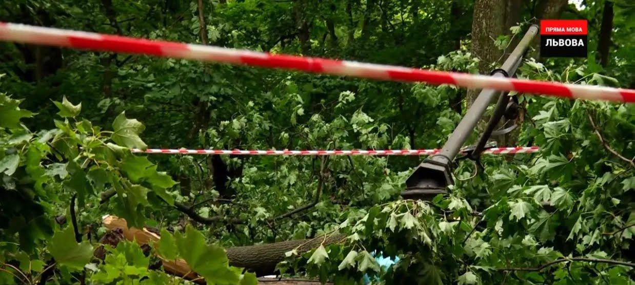 Дерево задело уличный фонарь, который тоже сломался и упал на молодых людей
