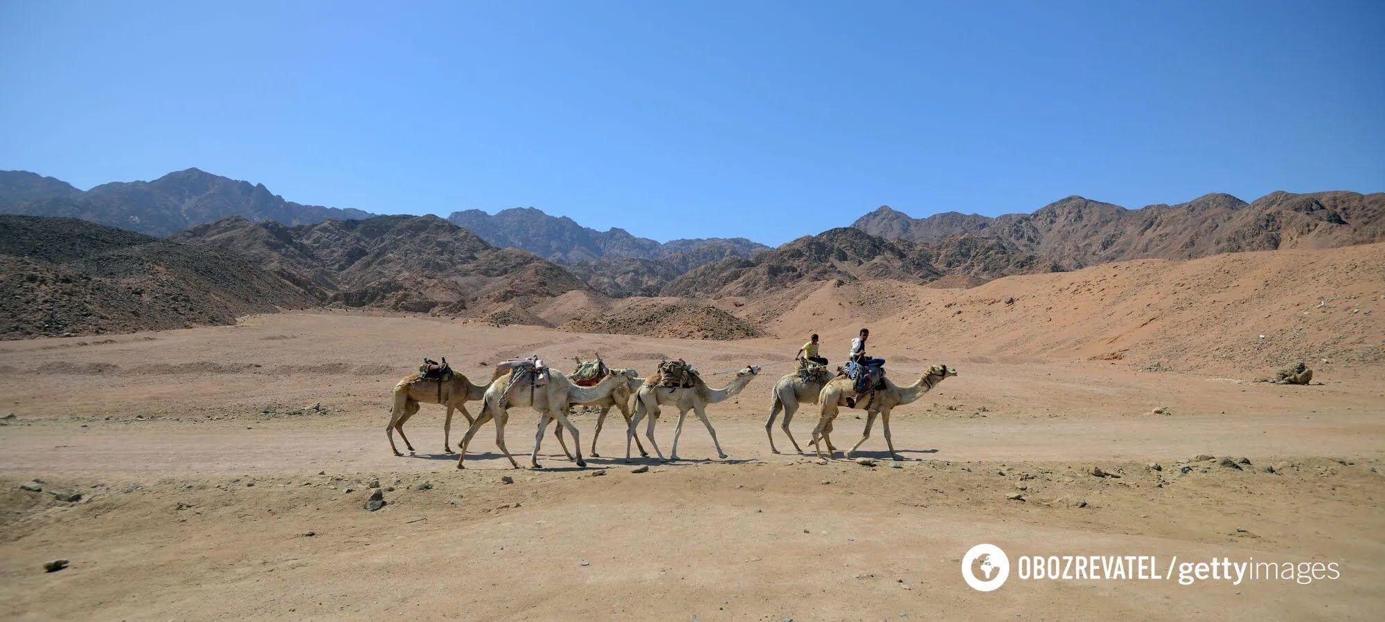 Катание на верблюдах в Дахабе.