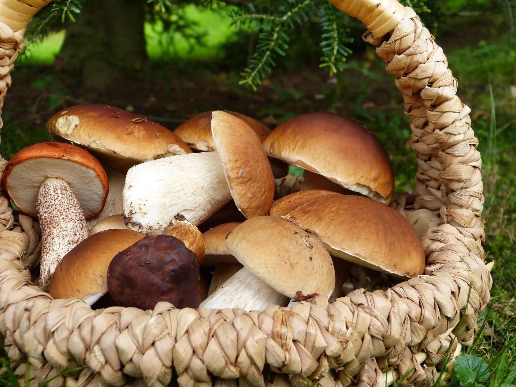 Как правильно готовить лесные грибы