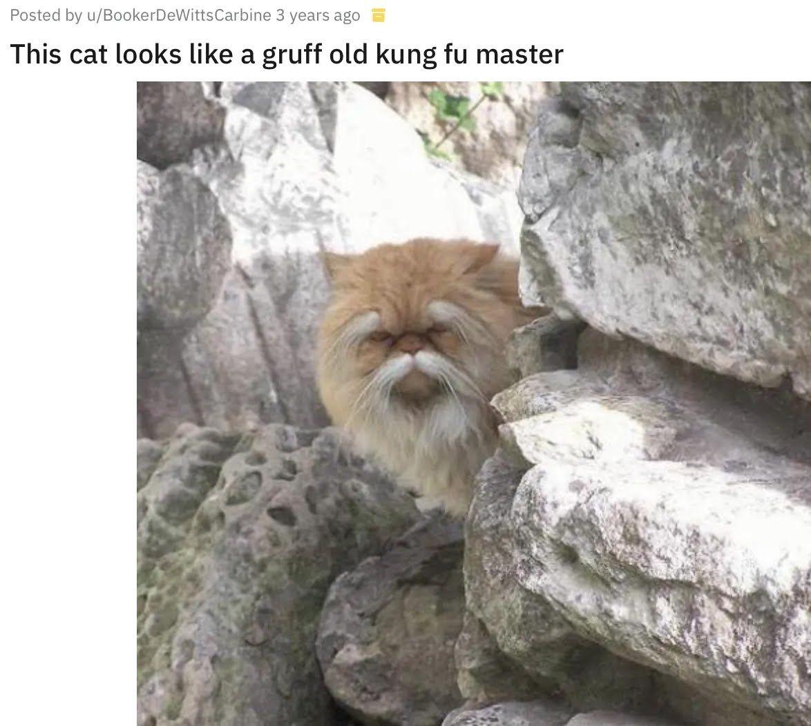 Кіт схожий на дідуся