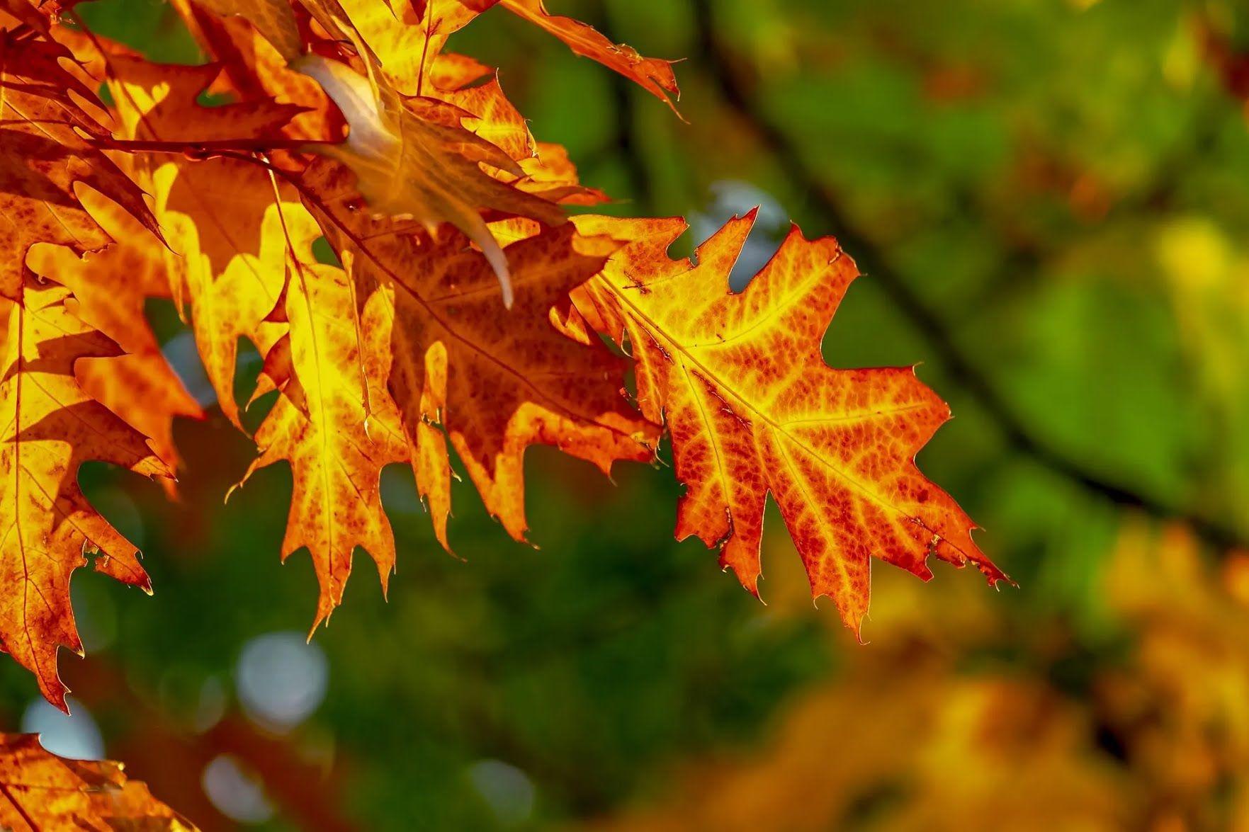 Вважається, що після 17 вересня посилюються холоди