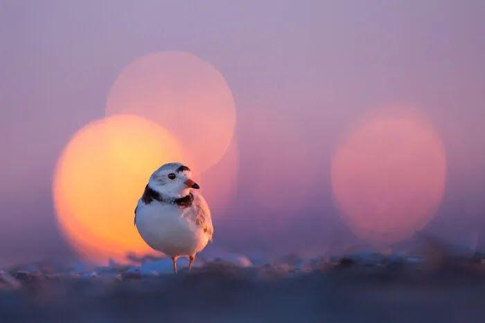 Фотограф снял крошечную птицу крупным планом.