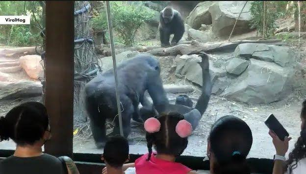 Мавпи готуються до орального сексу