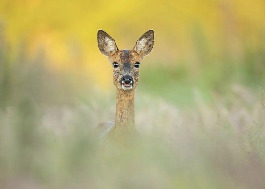 Молодой олень скрывается от фотографа.