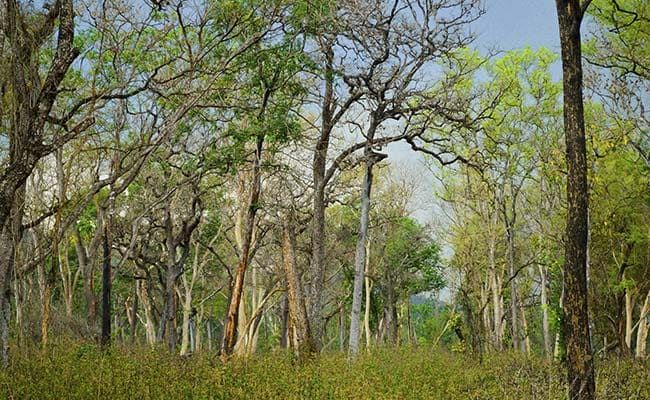 A Third Of Global Tree Species Threatened With Extinction: Report