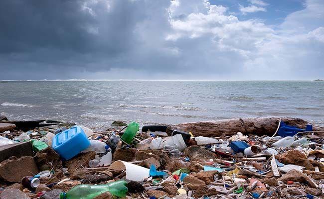 Plastic Threatens Migratory Species In Asia-Pacific Region: UN