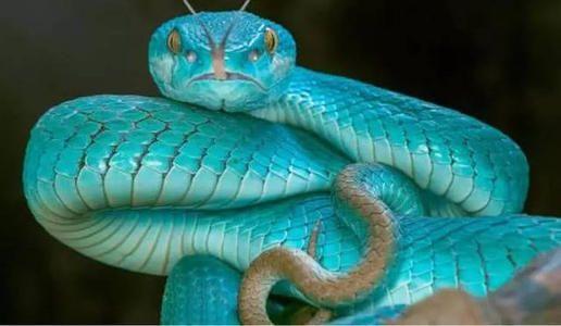 传说中,龟,鱼,马,蛇是怎么进化成龙?要经过那些的磨练和修炼? 古代故事大全 民间故事大全 神话故事大全 第1张