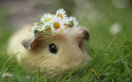 4-5岁儿童最喜欢听的故事:小老鼠扫落叶