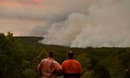incendies, australie, souris