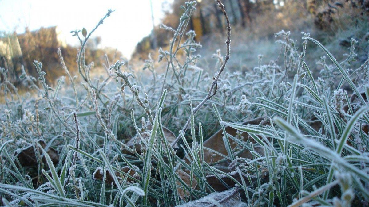Заморозки ожидаются в восточных областях / moldova24.net