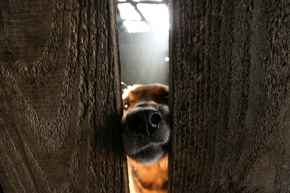 Жінка повісила собаку на дереві / фото УНІАН