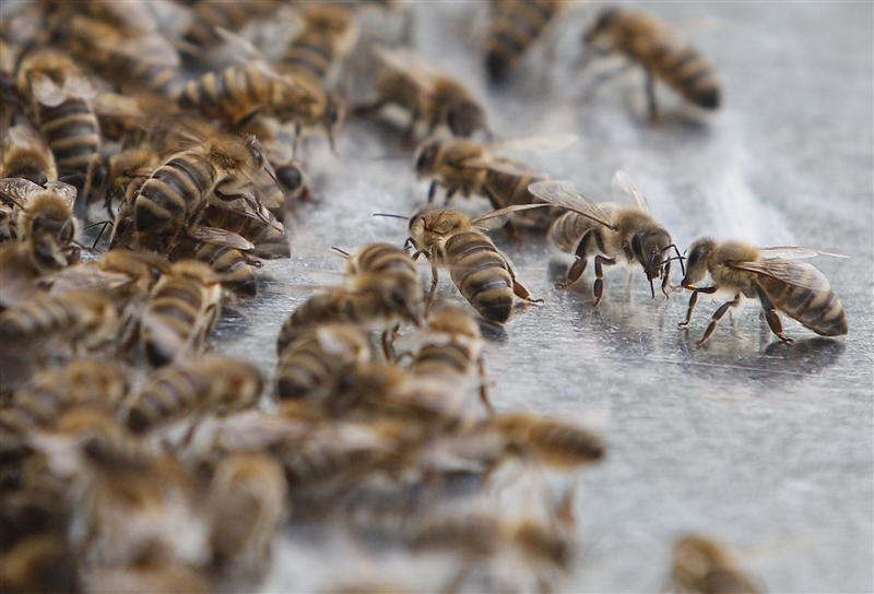 В Укрпочте ожили пчелы, но отправитель отказывается их забирать / иллюстрация / REUTERS