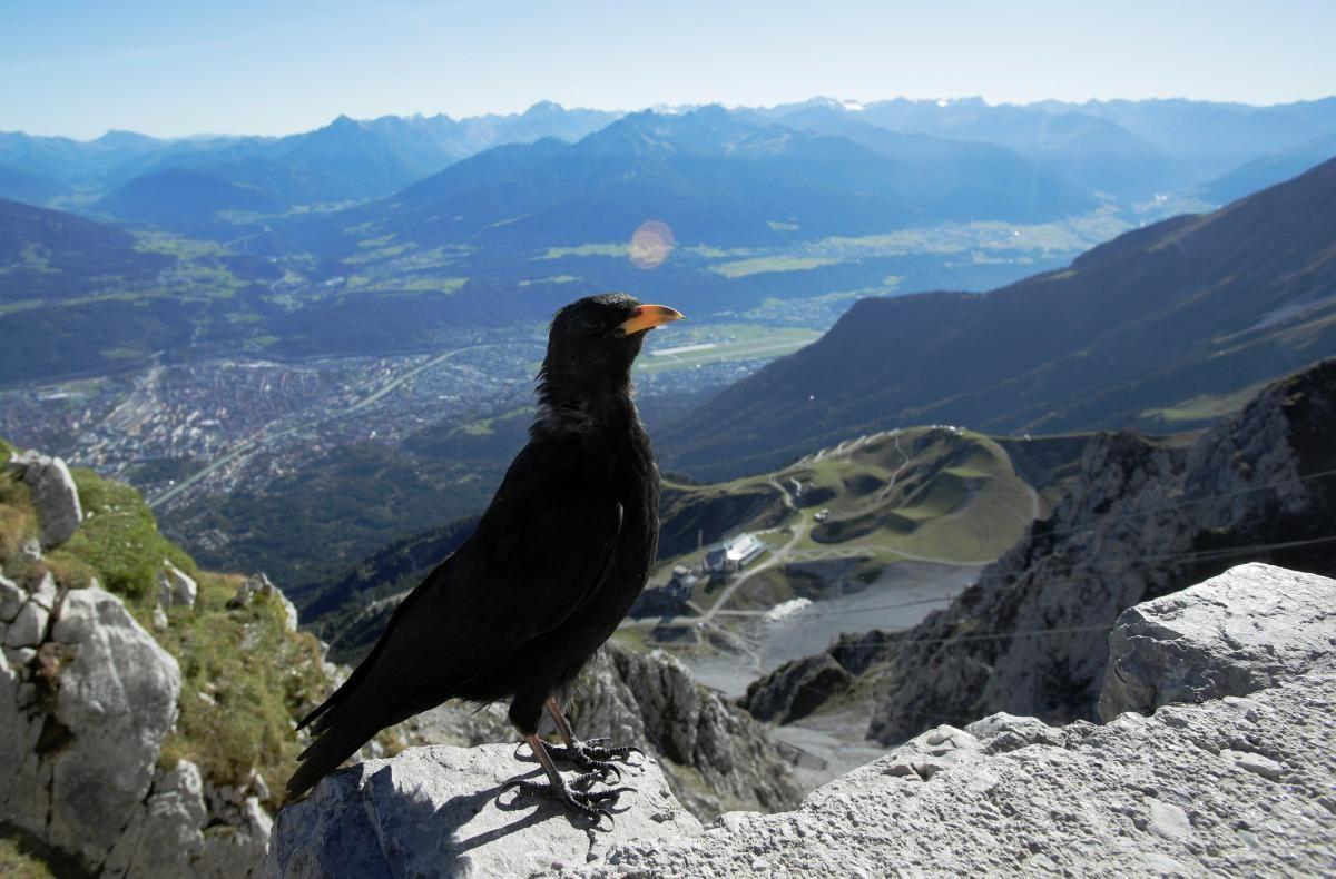 """Минулий рік для Швейцарських Альп видався """"гарячим"""" / фото REUTERS"""