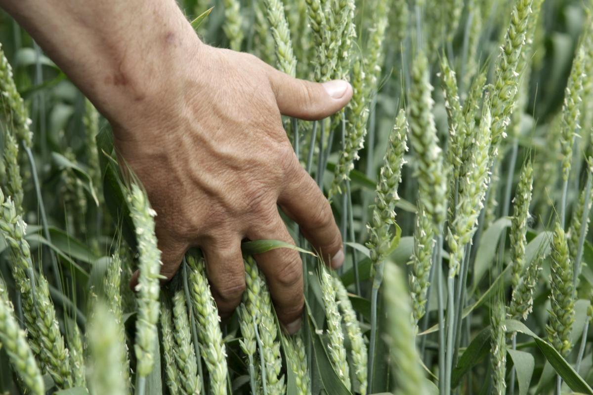 Кліматичні зміни будуть призводити до зниження врожайності аграрних культур / REUTERS