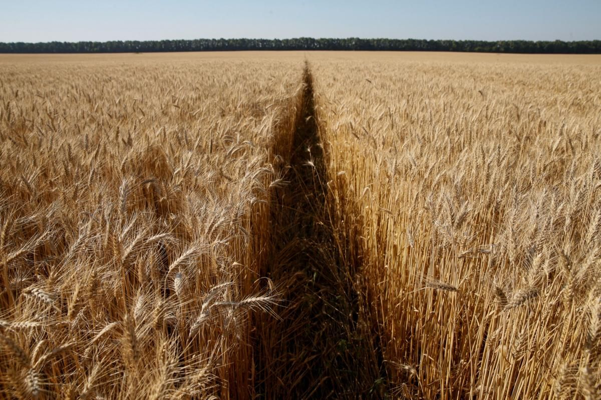 Ukraine exports almost 15 mln tonnes of grain since new MY / REUTERS