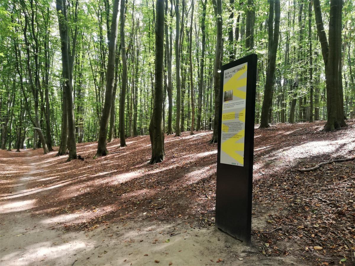 ''Желтая'' эко-тропа в Голосеевском лесу